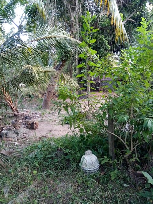 Land for sale - Dankotuwa Etiyawala